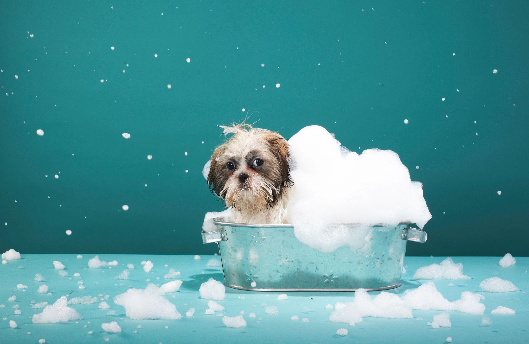 dogs bath